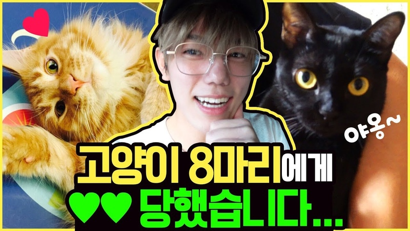 2IDIOTS | Ep.5 - *simkung (heart attack) caution* XX lost to 8 cats...ㅠ