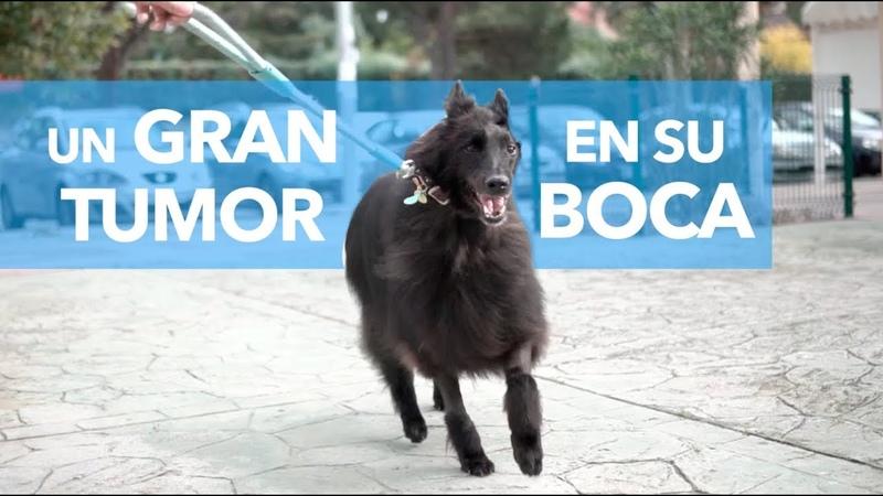 Новообразование в ротовой полости у собаки