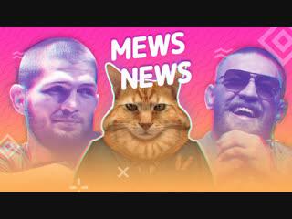 Mews news толстые коты и пушистые бои