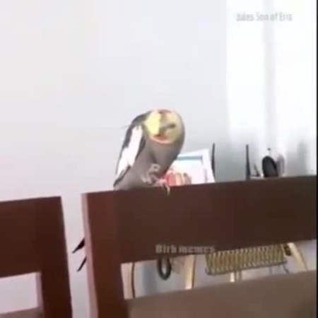Bird uses the force