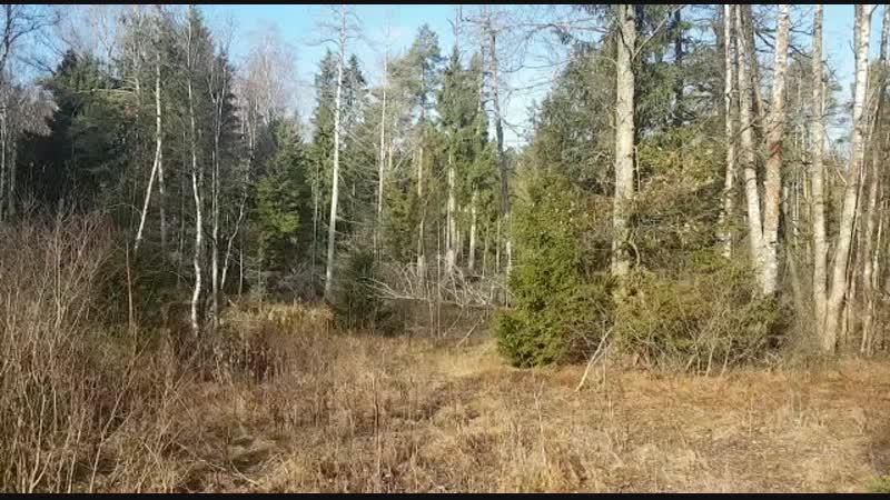 Сегодняшний видеокоп. www.poryvaev.ru