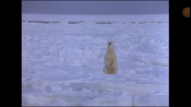 Аляска 1996 отрывок 1