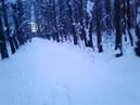 ЖК Рассказово забор в лесу