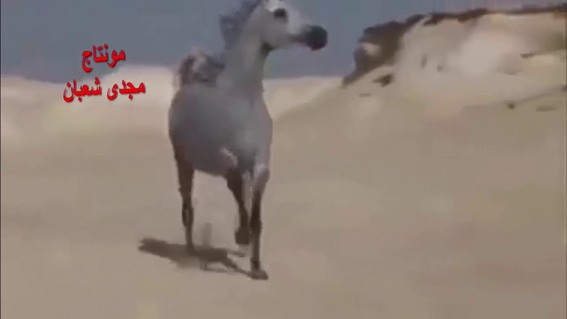الايام تفعل ما تشاء ! قناة مجدى شعبان اشترك1