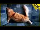 ПРИКОЛЫ С КОТАМИ - Топовая подборка приколов про котов 135 смешная озвучка котов