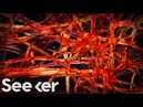 How Millions of Microscopic Fibers Are Ending Up in Our Bodies The Swim