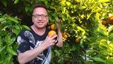 Новый год запрятан в мандарине... на Кипре. Читает Владимир Глазунов. Стихи Моники Котовой