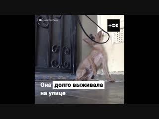 Спасли собаку. Спасибо таким людям!