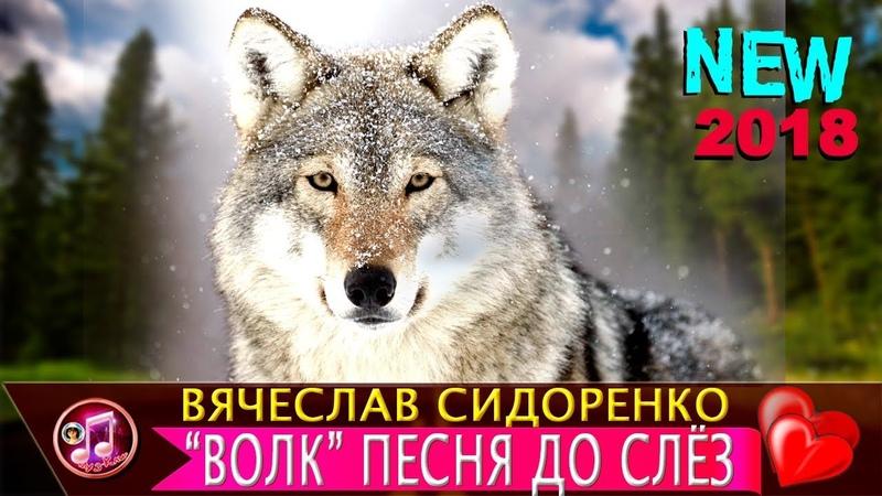 Волки Тоже Умеют Любить ОБАЛДЕННАЯ ПЕСНЯ до СЛЁЗ Вячеслав Сидоренко ❤️🎵