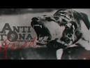 TRAP BEAT GOLOD NEW INSTRUMENTAL 120 BPM prod by AntiGona