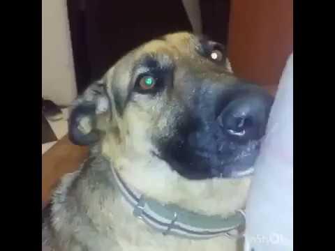 Собака курит план Смотреть до конца