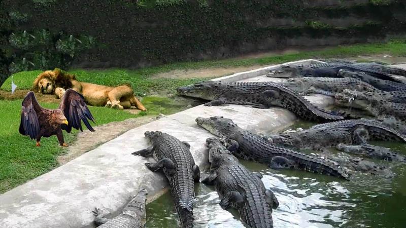 Đòn tấn công bất ngờ của động vật khi săn mồi nguy hiểm như thế nào Wow Animals surprise attack
