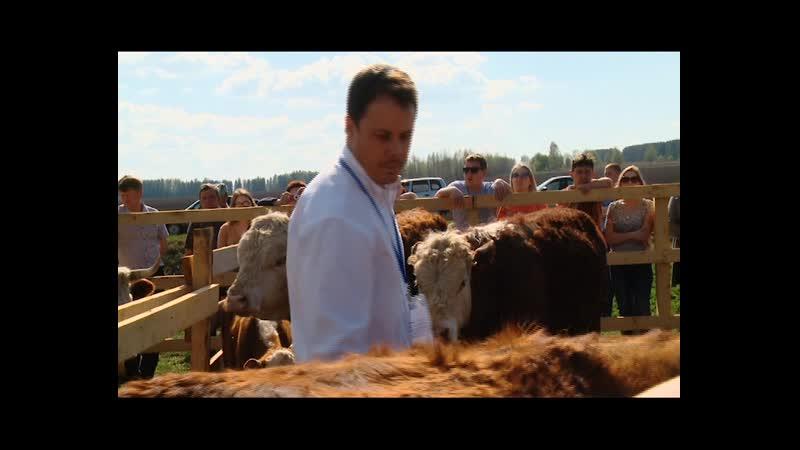 Удмуртской мраморной говядине - быть! Республика будет развивать мясное скотоводство.