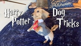 my dog only responds to Harry Potter spells.
