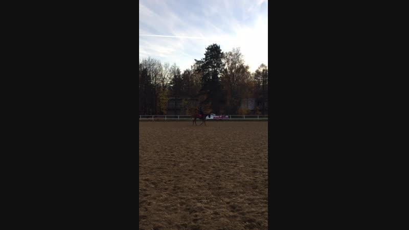 Лошади 🐎