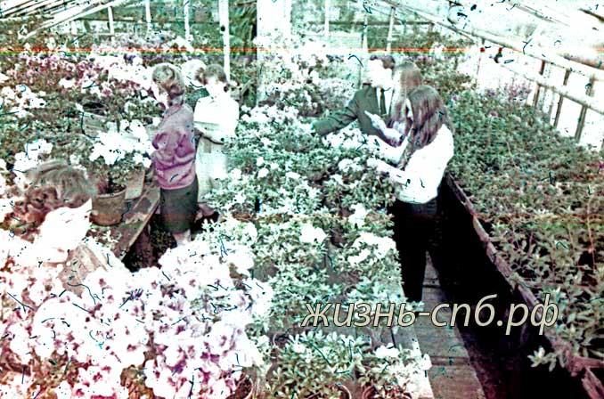 Латвийская ССР. Cтуденты в оранжерее ботанического сада Университета.