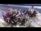 Вот так выглядит каракатица. Теперь вы видели всё.