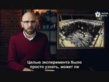Как ученый пытался создать рай для мышей [ЖЮ-перевод]