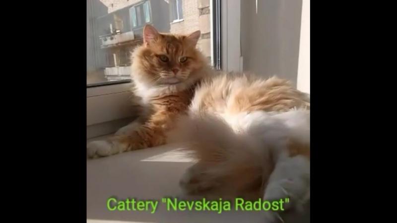 Отэц почти всея Питерской Невской Радости Эдгар Барвинок уж 5 лет с хвостиком мужику люблю этого Красного😍😇😊