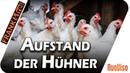 Aufstand der Hühner Frank frei