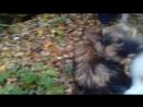 Самый лучший пес! В парке с друзьями.