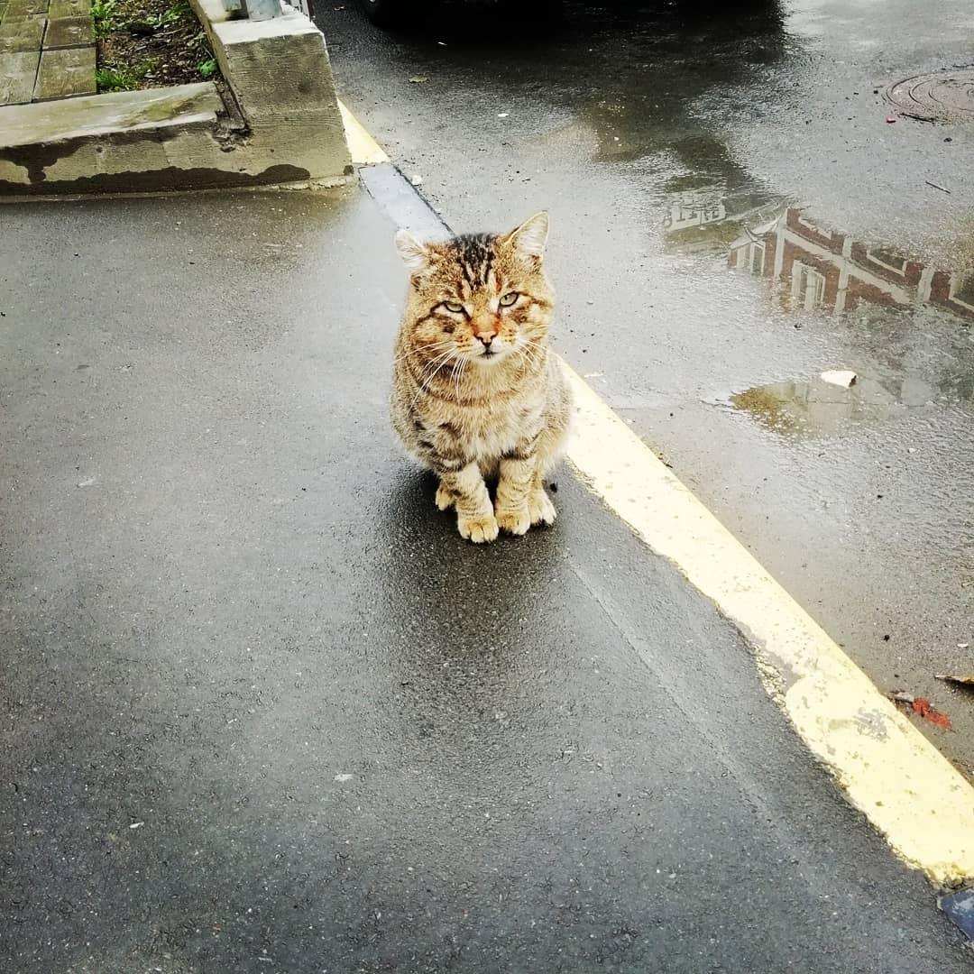 Готов все 9 жизней отдать, кот без хвоста, люди откройте глаза.