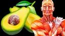 Вот Что Случится Если вы Будете Съедать Авокадо в День в Течение Месяца