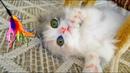 Играем с котенком Маленький котенок смешно играет с игрушками Видео для детей про животных