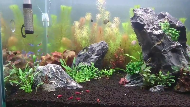 Bể thủy sinh đẹp bạn Duy Tâm-Aquarium Fish Tank
