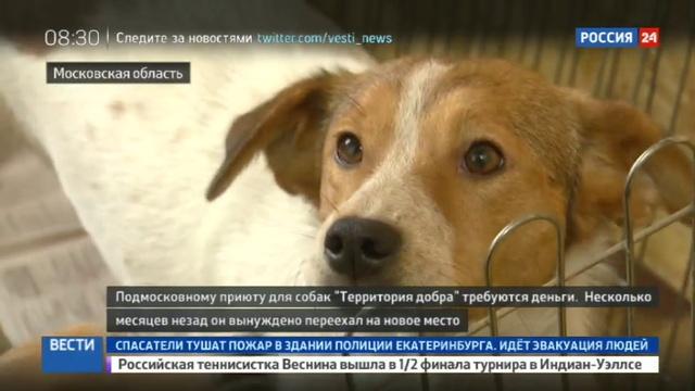 Новости на Россия 24 • Территория добра для собак создаст большой парк