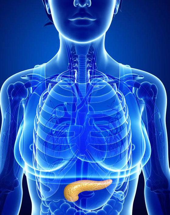 Рак может повлиять на поджелудочную железу, железу, которое способствует пищеварению и вырабатывает инсулин.