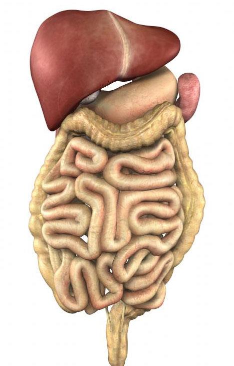 Серьезные симптомы рака тонкой кишки включают кровотечение, усталость и потерю веса.