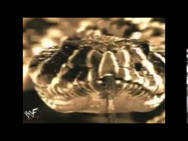 Stone Cold Steve Austin Alliance Entrance Video