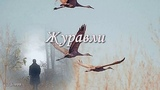 Владимир Тимофеев - Журавли.Автор монтажа ролика Галина Смирнова.