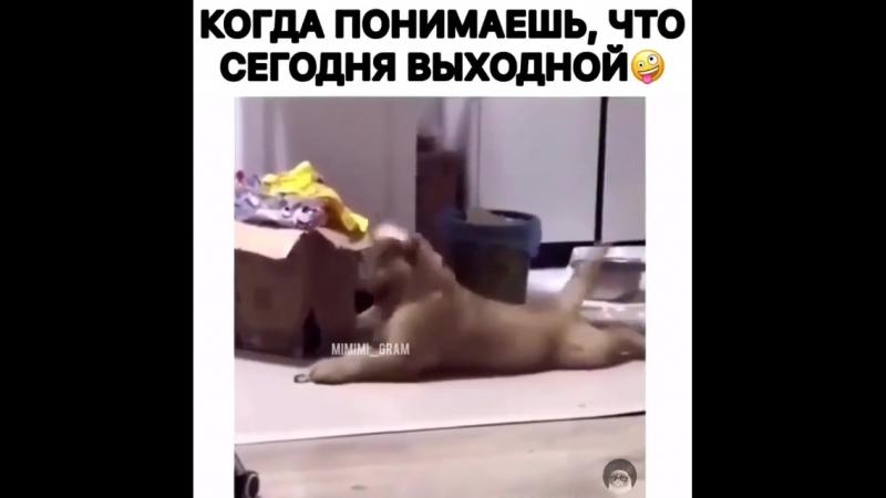 Animal_planet_vid_1_17092018_0405.mp4