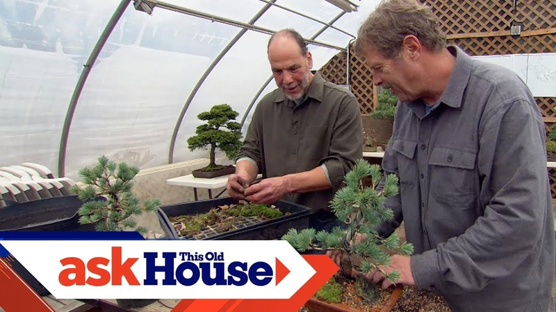 How to Create Bonsai from Regular Trees