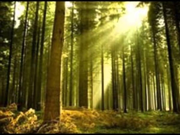 სიმღერა ტყე შეუნახე შვილებსა