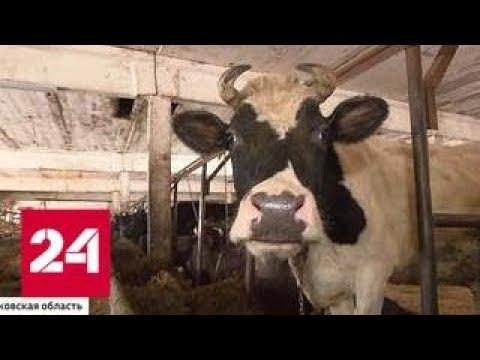 Бросивший на произвол судьбы коров и коз хозяин оштрафован Россия 24