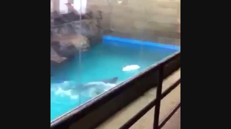Рыбки рыбки что за счастье аш с ног падаем