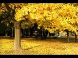 Mr. Acker Bilk - Autumn Leaves