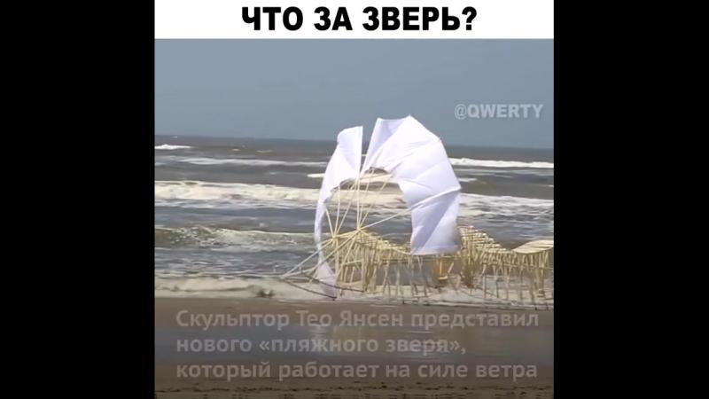 Пляжный зверь