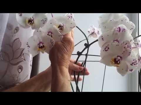 Чтобы орхидеи хорошо цвели удобр.дрожи