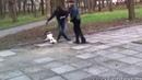 мужик собака дед смешно до боли выпуск 5