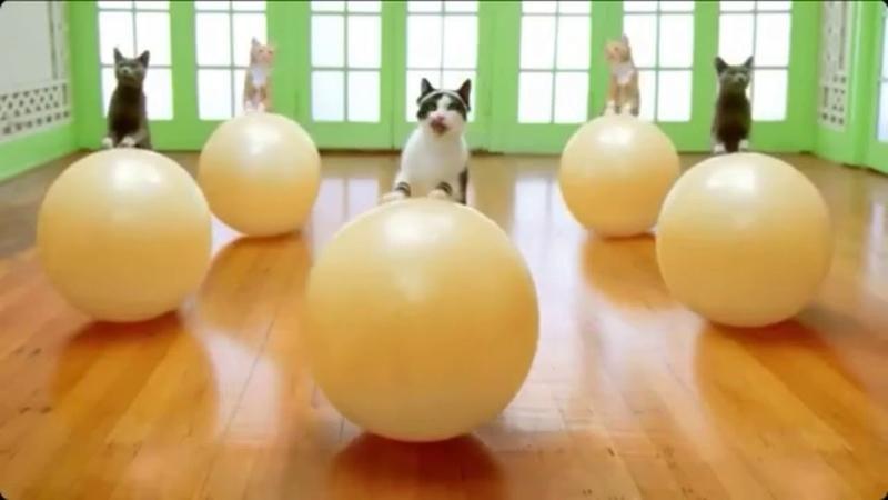 Приколы с котами,котятами и другими животными 19 Jokes with cats, kittens and other animals