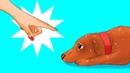 12 Вещей Которыми вы Причиняете Вред своей Собаке Не Осознавая Этого