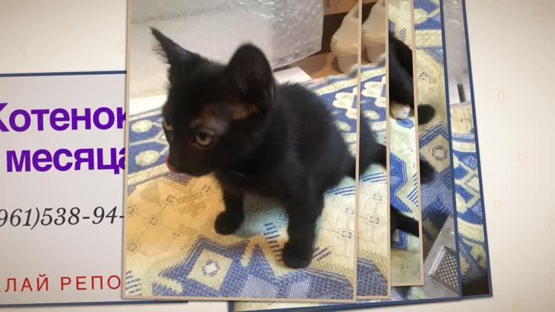 Чёрный котенок