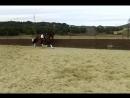 Купить андалузскую лошадь для спорта мы в Испании есть доставка