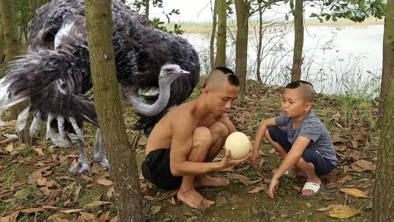 Trứng Thần Điểu Loài Chim Lớn Nhất Thế Giới - Cười Vỡ Mồm Với Pha Trộm Trứng Chim Bị Phát Hiện