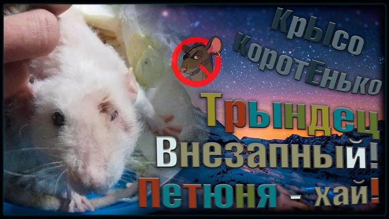(О) Очередной ТРЫНДЕЦ крысиный! Растет, цветёт и пахнет наш приют. (Fancy Rats)