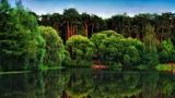 Картинка озеро. Сосны, зелёные листья Lago dos debuxos. Pineiros, follas verdes